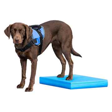 Picture of FITPAWS CANINE CONDITIONING Balance Pad - 15x18.25x2in