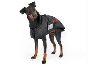 Picture of BACK ON TRACK DOG RUG 67cm(tu)