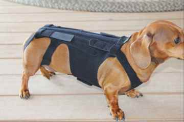 Picture of CANINE LIL BACK BRACER - Large