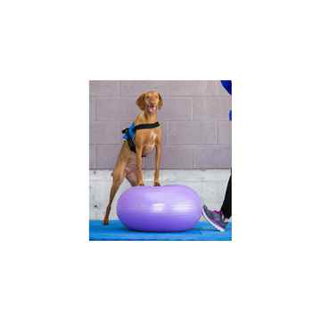 Picture of FITPAWS CANINE CONDITIONING TRAX Donut Purple 13in - Kit