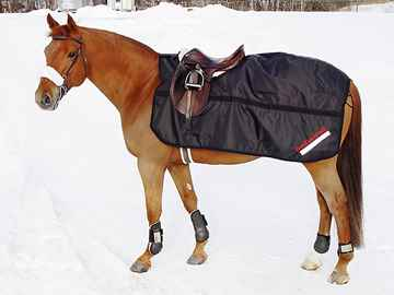 Picture of BACK ON TRACK HORSE EXERCISE RUG 72in