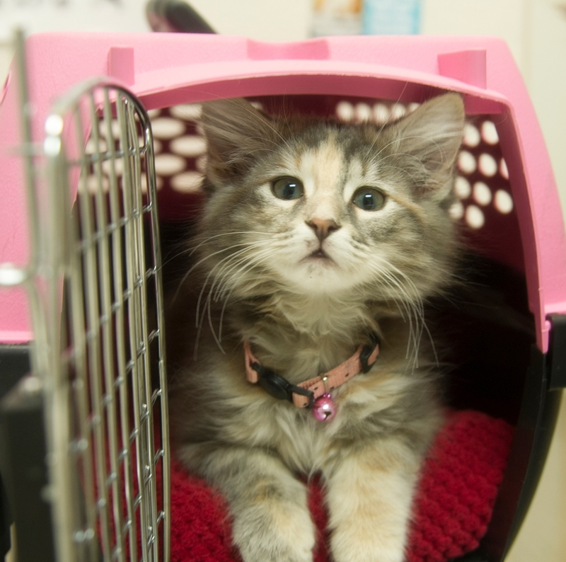 Picture for category Cat Kennels and Beds