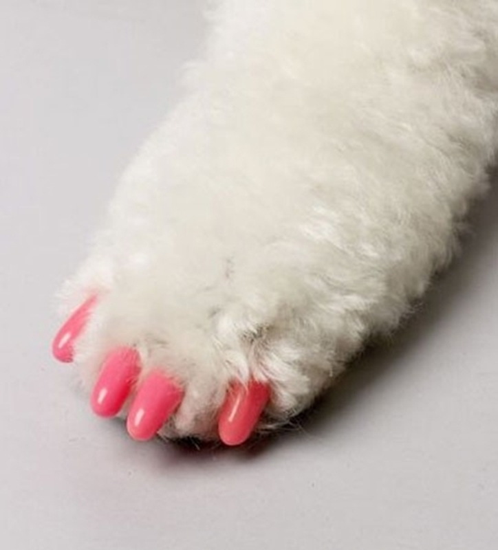 Picture for category Soft Claws