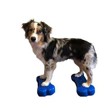 Picture of FITPAWS CANINE FITBone Mini Blue - 2/pack