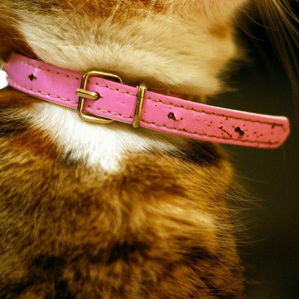 Picture for category Cat Collars
