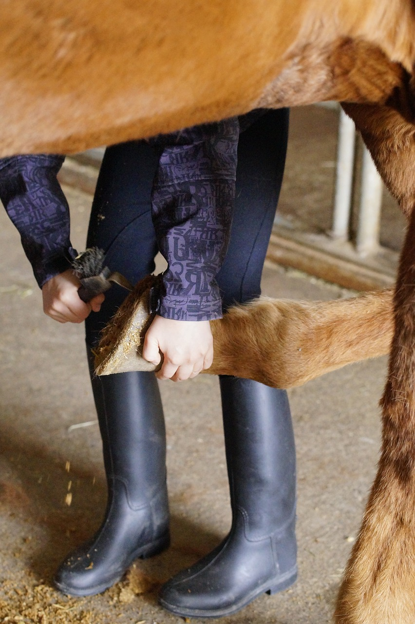 Picture for category Equine Grooming