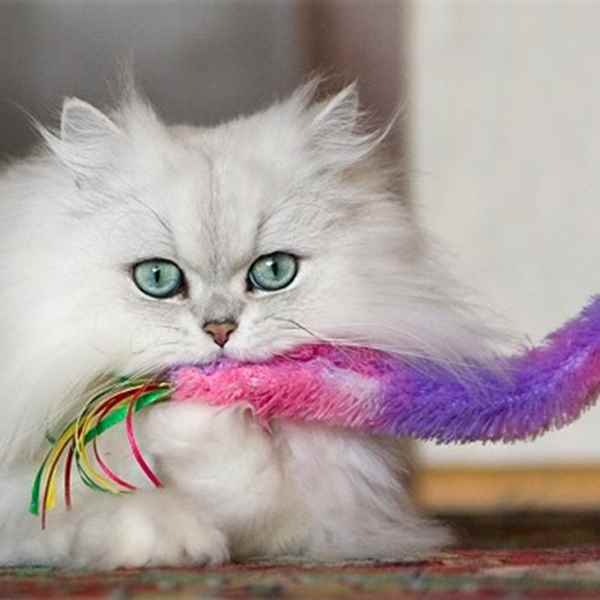 Picture for category Cat Toys