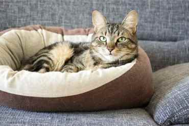 Picture for category Cat Kennels & Beds
