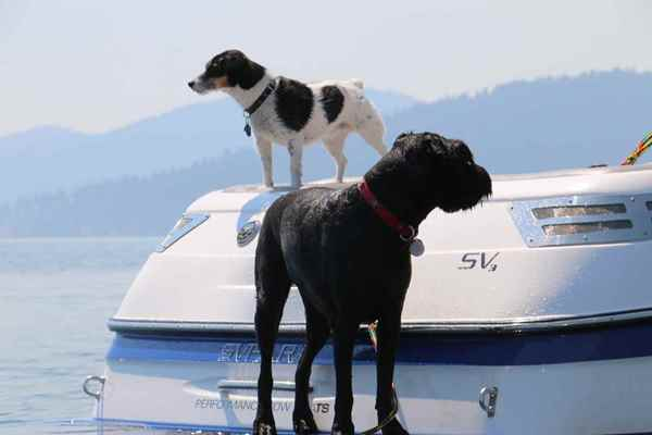 Picture for category Dog Outdoor