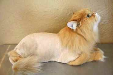 Picture for category Advanced Grooming