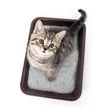 Picture for category Cat Litters
