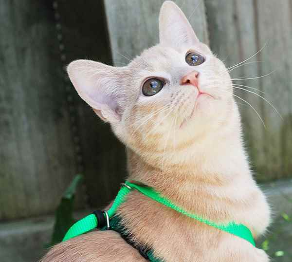 Picture for category Cat Harnesses and Leashes