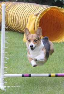 Picture for category Dog Training