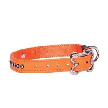 Picture of COLLAR ROGZ LAPZ LUNA PIN BUCKLE Orange - 1/2in x 8.7-11in