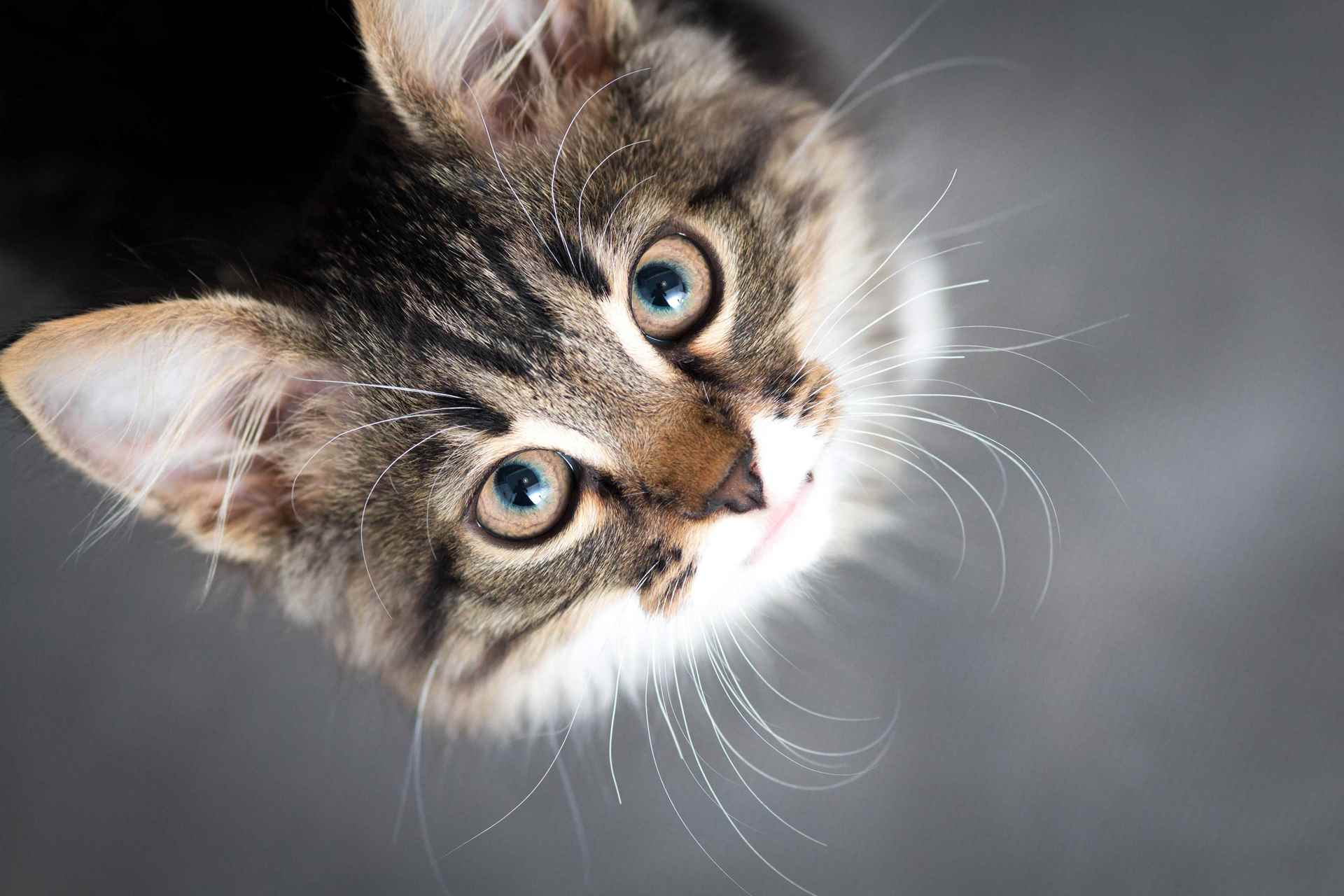 Picture for category Cat