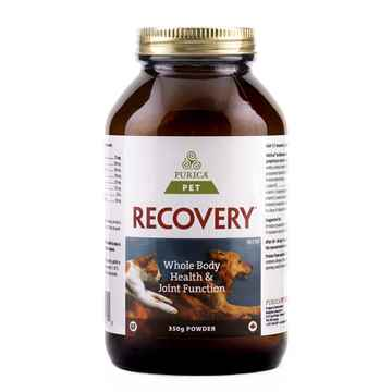 Picture of RECOVERY NUTRACEUTICAL CANINE/FELINE POWDER - 350gm