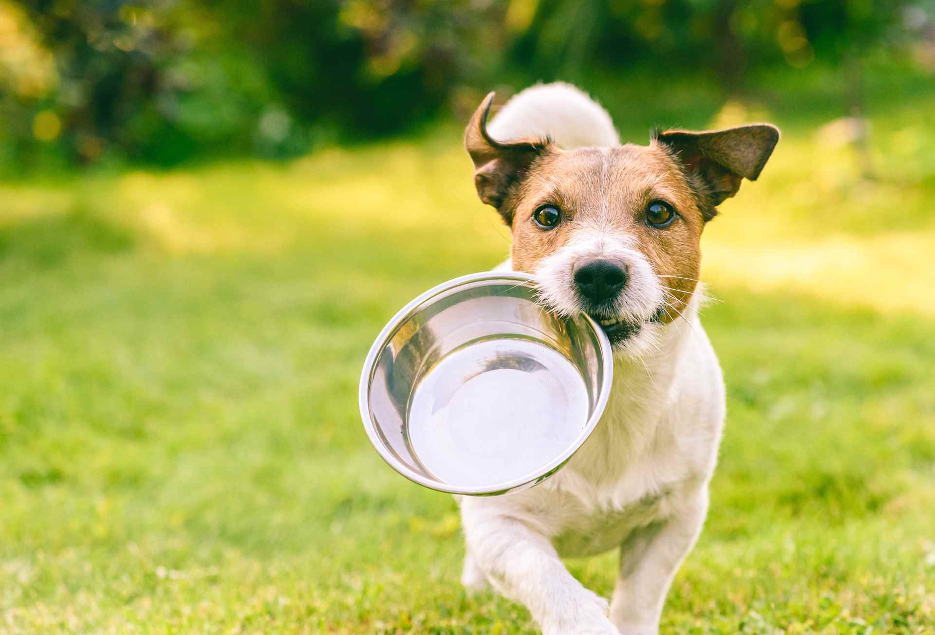 Picture for category Dog Food