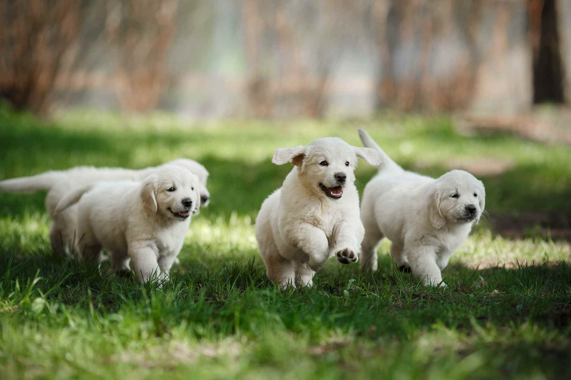 Picture for category Playful Puppy