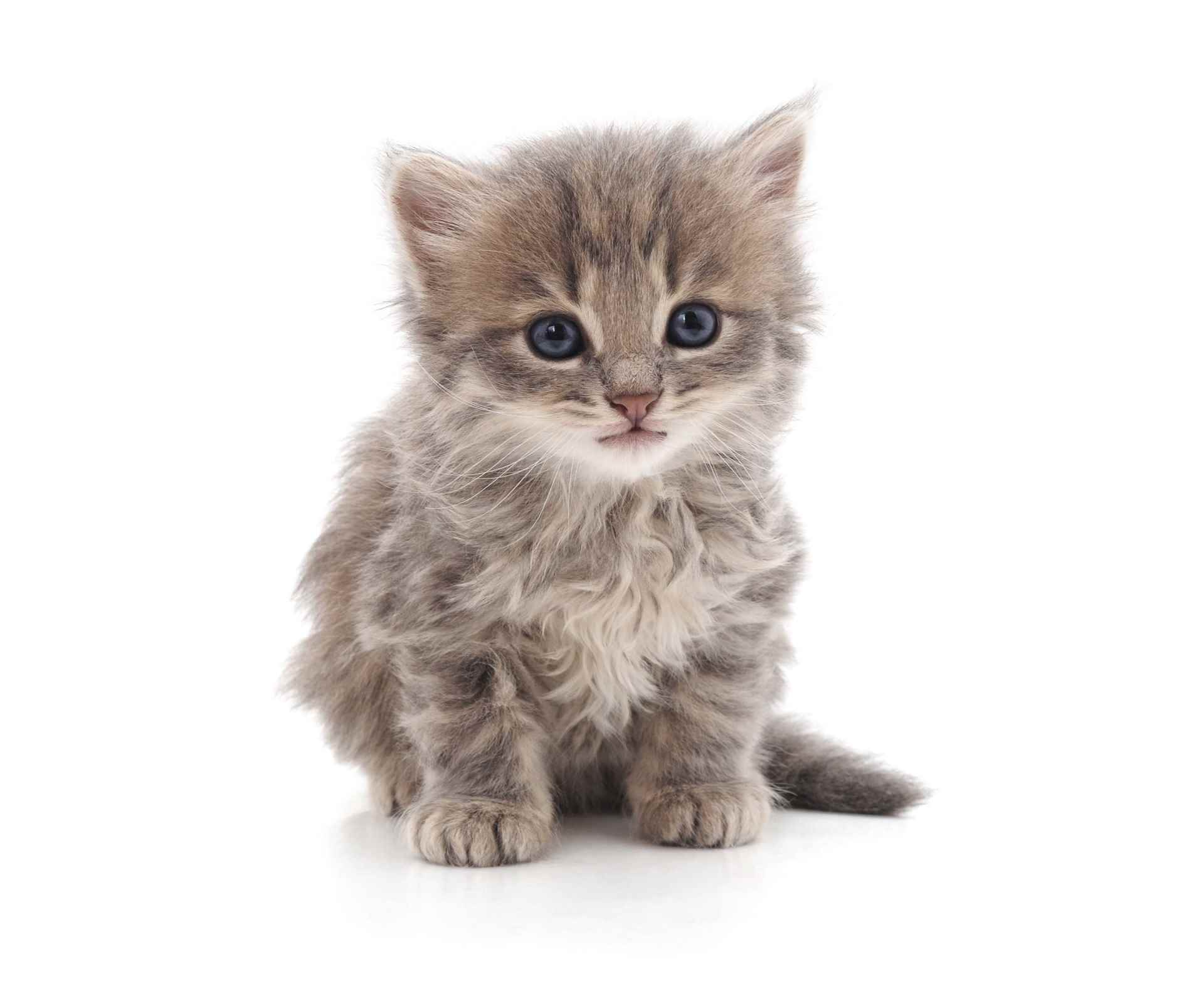 Picture for category Curious Kitten