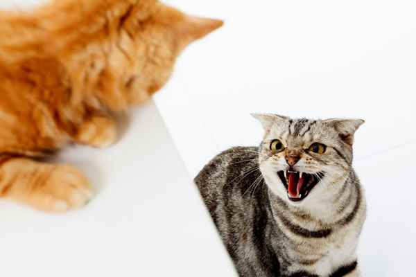 Picture for category Cat Behavioural Products