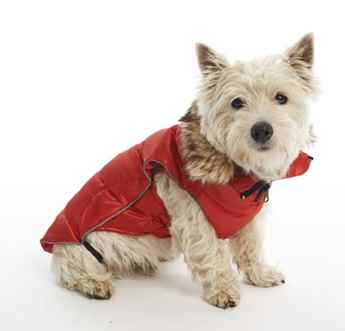 Picture of COAT BUSTER ACTIVE DOG High Risk Red - XX Small