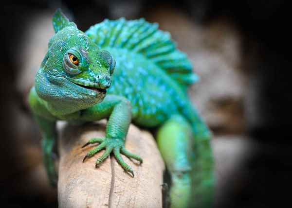 Picture for category Reptiles
