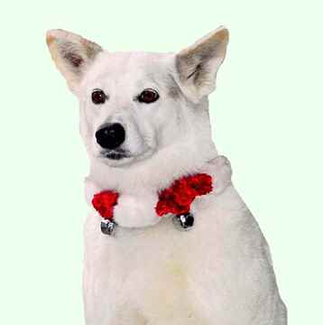 Picture of XMAS HOLIDAY OUTWARD HOUND BELL COLLAR Red/White - Small (nr)