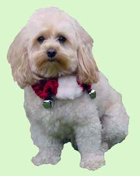 Picture of XMAS HOLIDAY BELL COLLAR Red/White  (S-L)