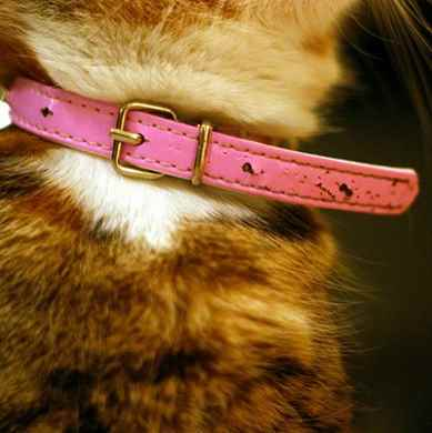 Picture for category Cat Collars, Harnesses and Leads