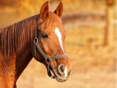 Picture for category Equine Accessories