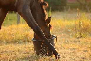 Picture for category Equine Treats and Supplements