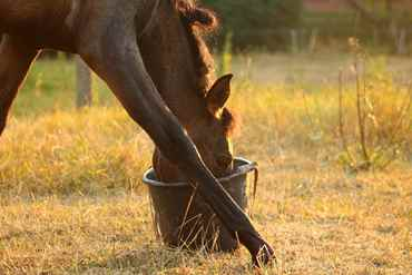 Picture for category Equine Food