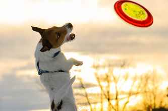 Picture for category Dog Accessories