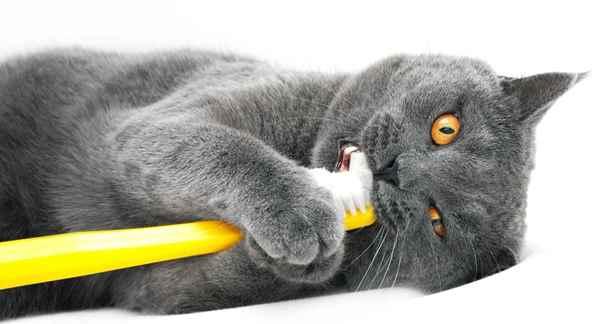 Picture for category Feline Dental