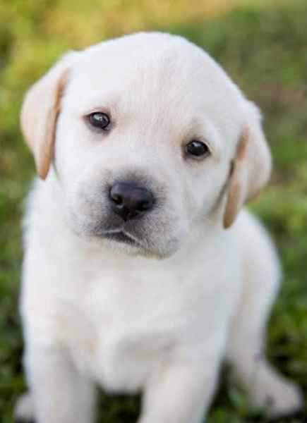 Picture for category Puppy and Training Supplies