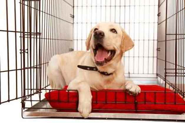 Picture for category Dog Kennels & Beds