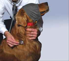 Picture of CALMING CAP by Thundershirt - Small