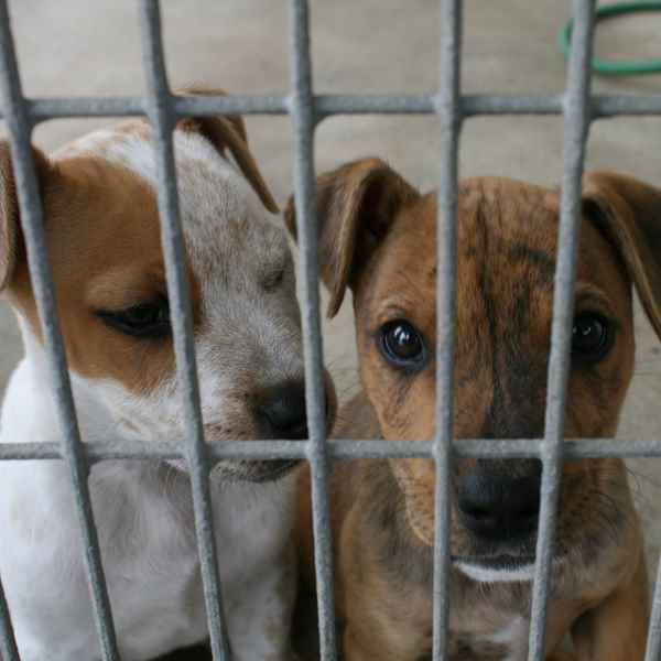 Picture for category Misc Kennels