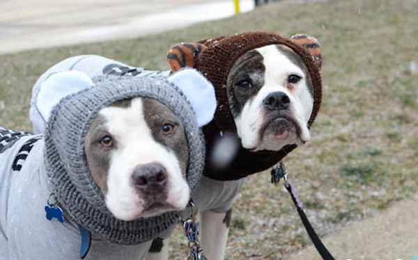 Picture for category Dog clothes and apparel