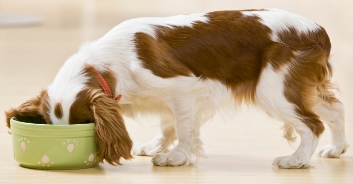 Picture for category Dog Food A - Z
