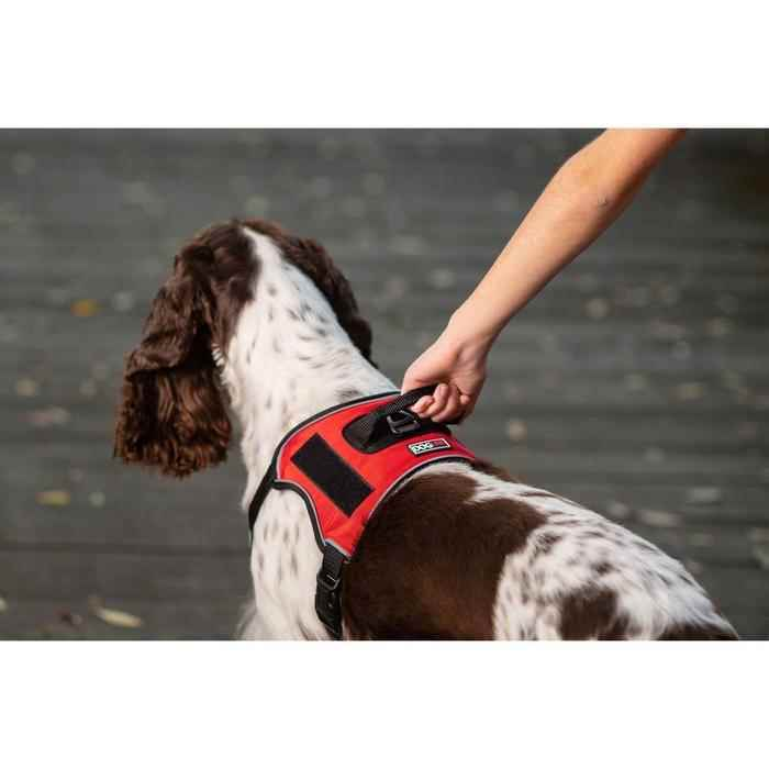 Picture for category Dog Collars, Leashes, Harnesses, and Training products