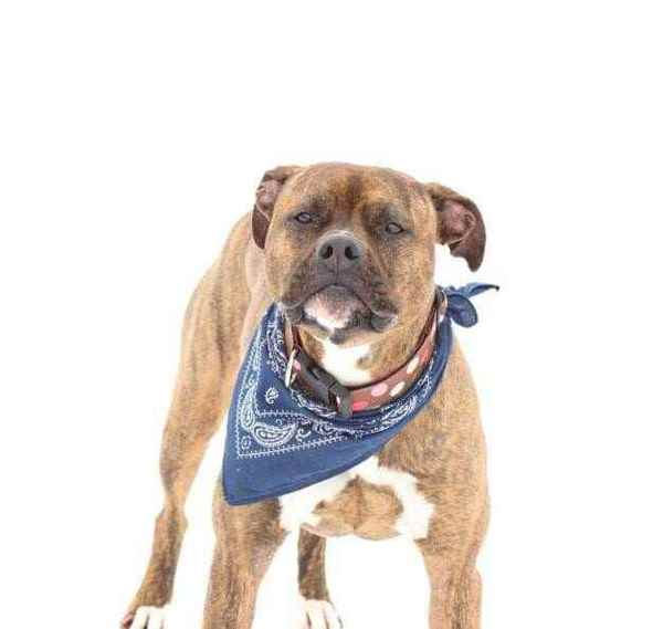 Picture for category Dog Apparel