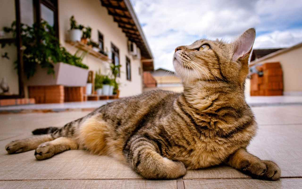 Picture for category Adult Cat Diet