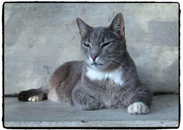 Picture for category Senior Cat food