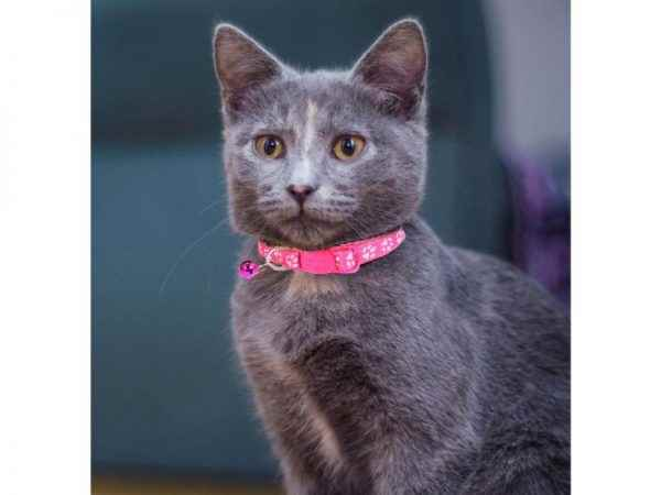 Picture for category Cat Collars and Harnesses