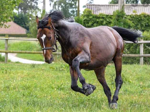 Picture for category Horse Supplements