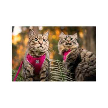 Picture of LEAD AND HARNESS COMBO RC ADVENTURE KITTY Medium - Raspberry