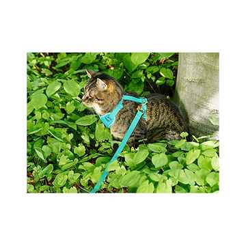 Picture of LEAD AND HARNESS COMBO RC ADVENTURE KITTY Small - Teal