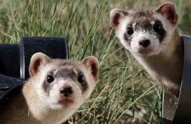 Picture for category Ferret Items