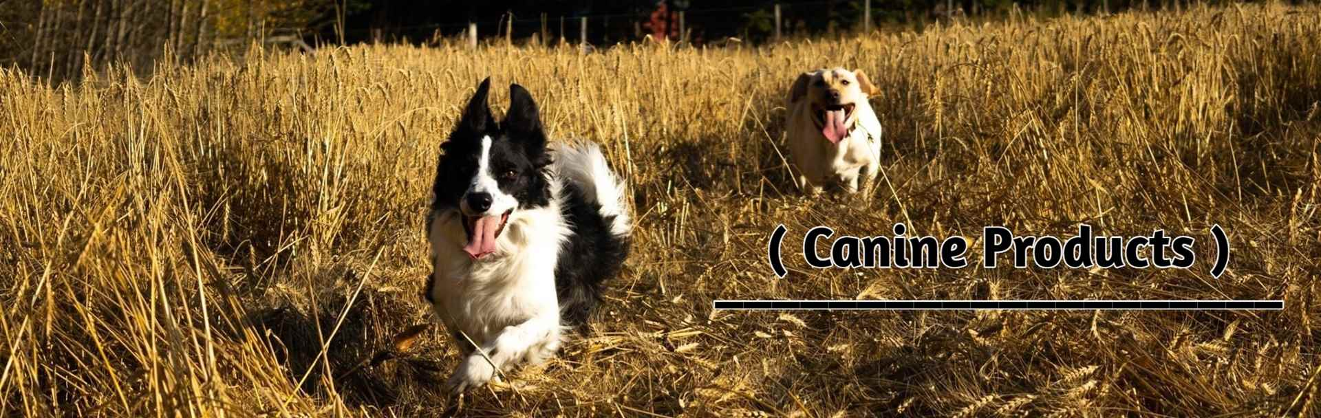 canine-products